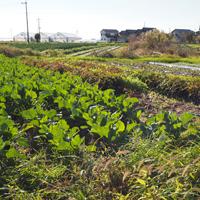 【季節誌しずく】ミルク・野菜の木下牧場