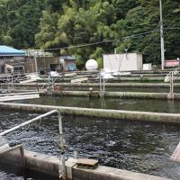 絹姫サーモン養殖場