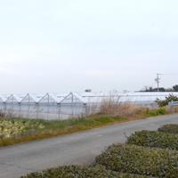 【季節誌しずく】河合農園ほうれん草