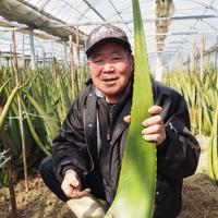 旬のしずく「アロエベラ」「季節誌しずく」生竹園芸