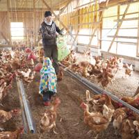アイスタイルデザイン「季節誌しずく」宮本養鶏場 なごみたまご