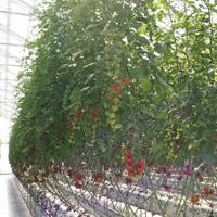アイスタイルデザイン「季節誌しずく」豊橋市 水野農園