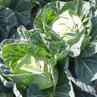 季節誌しずく,ドリームフィールド,乾燥野菜,ドライベジ